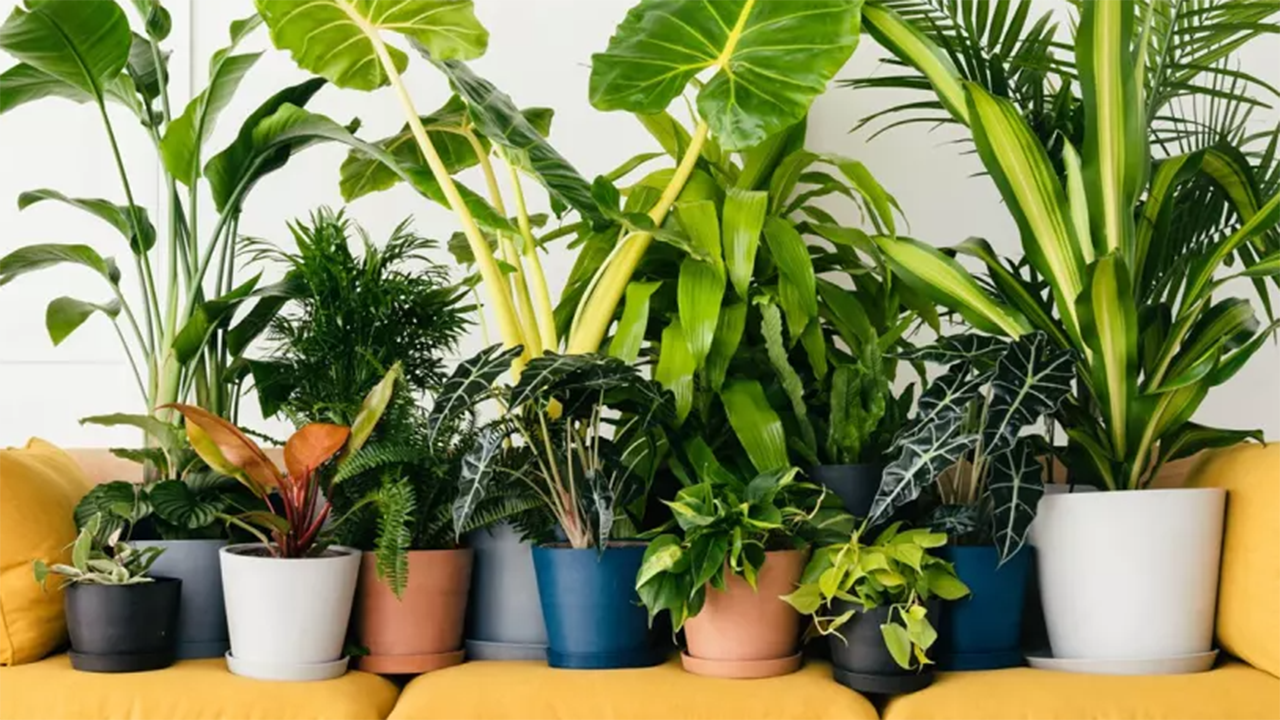 Best indoor plants: 18 gorgeous house plants for every room